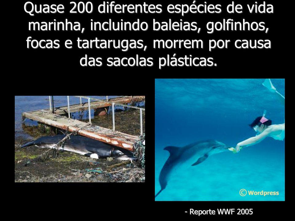 Quase 200 diferentes espécies de vida marinha, incluindo baleias, golfinhos, focas e tartarugas, morrem por causa das sacolas plásticas.