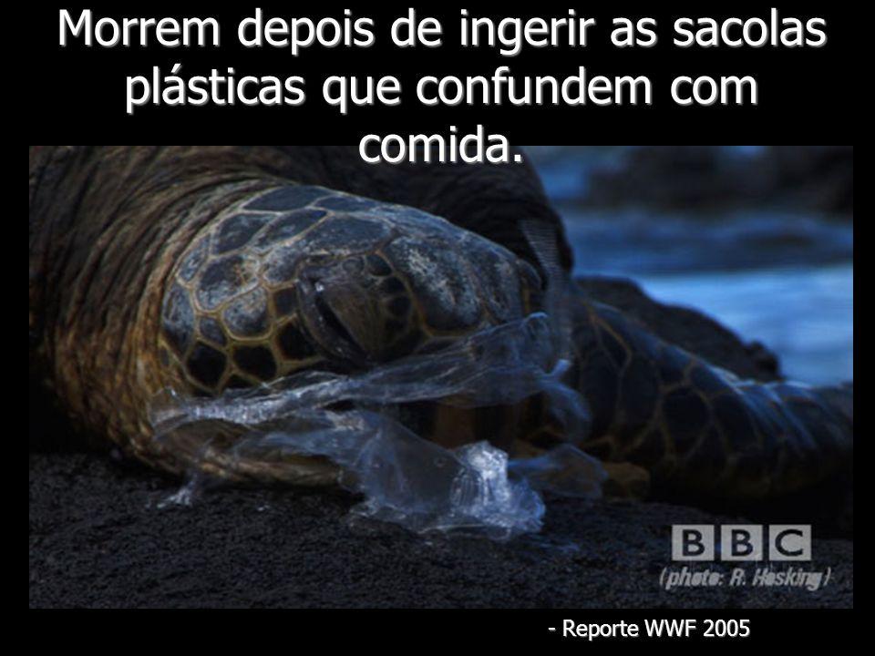 Morrem depois de ingerir as sacolas plásticas que confundem com comida.