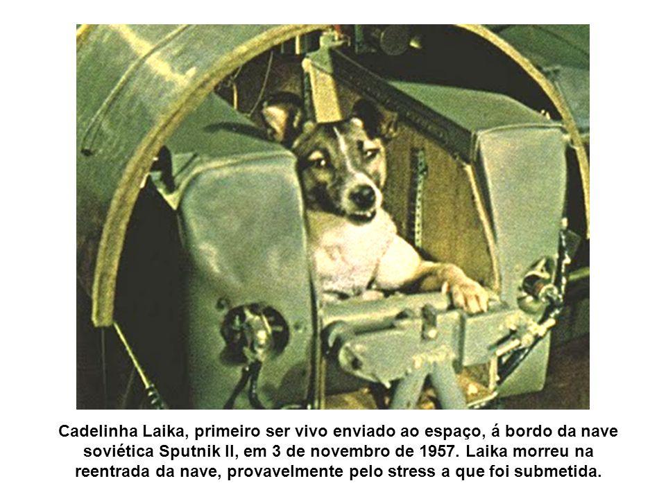 Cadelinha Laika, primeiro ser vivo enviado ao espaço, á bordo da nave soviética Sputnik II, em 3 de novembro de 1957.