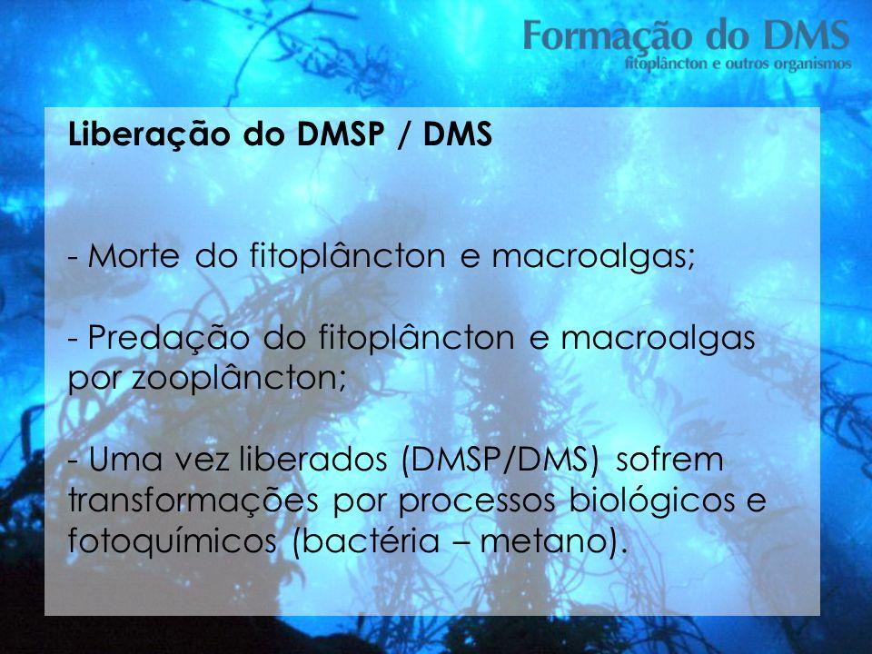 Liberação do DMSP / DMS Morte do fitoplâncton e macroalgas; Predação do fitoplâncton e macroalgas por zooplâncton;