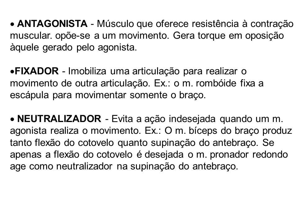 ANTAGONISTA - Músculo que oferece resistência à contração muscular
