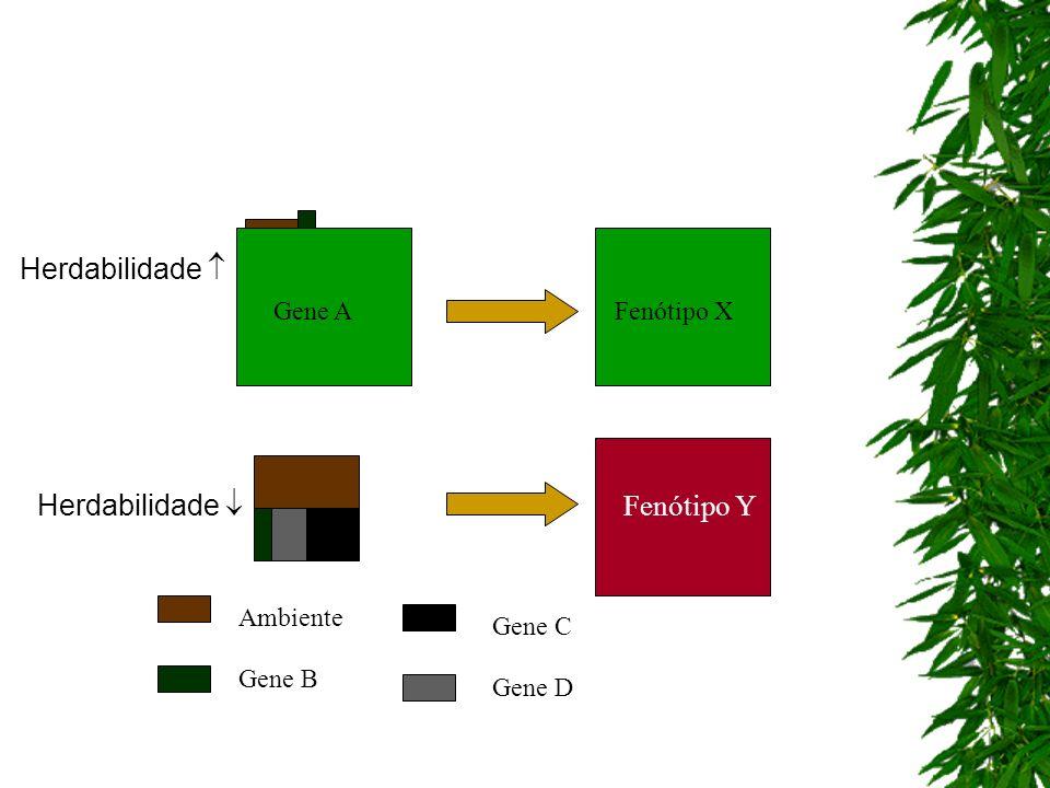 Herdabilidade  Herdabilidade  Fenótipo Y Gene A Fenótipo X Ambiente