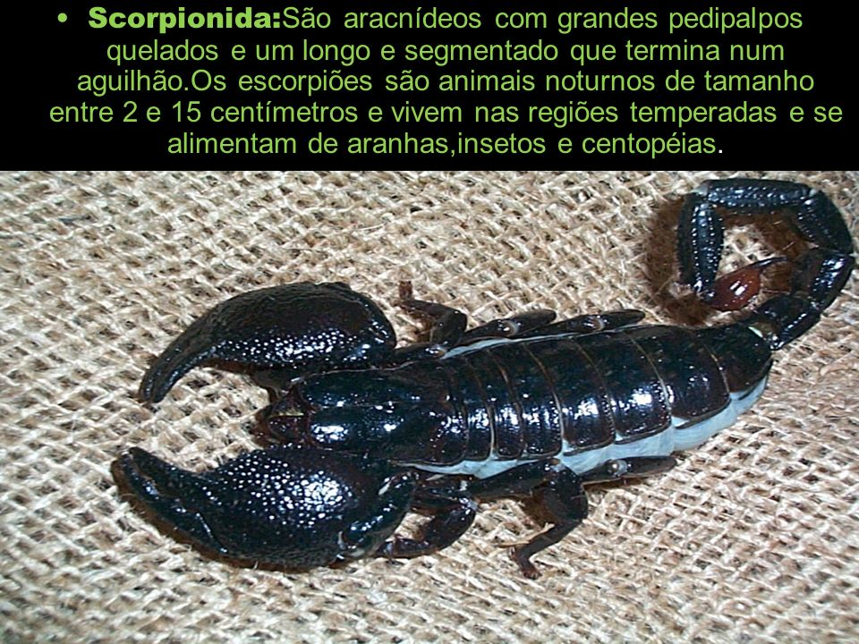 Scorpionida:São aracnídeos com grandes pedipalpos quelados e um longo e segmentado que termina num aguilhão.Os escorpiões são animais noturnos de tamanho entre 2 e 15 centímetros e vivem nas regiões temperadas e se alimentam de aranhas,insetos e centopéias.