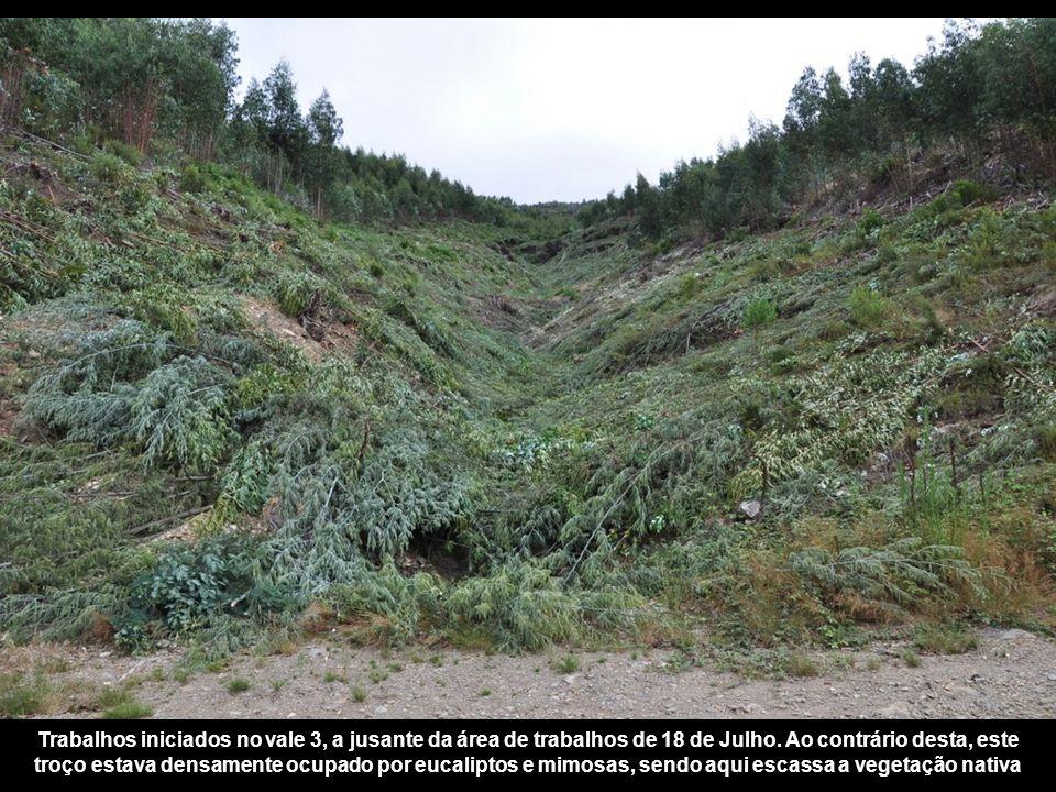 Trabalhos iniciados no vale 3, a jusante da área de trabalhos de 18 de Julho.