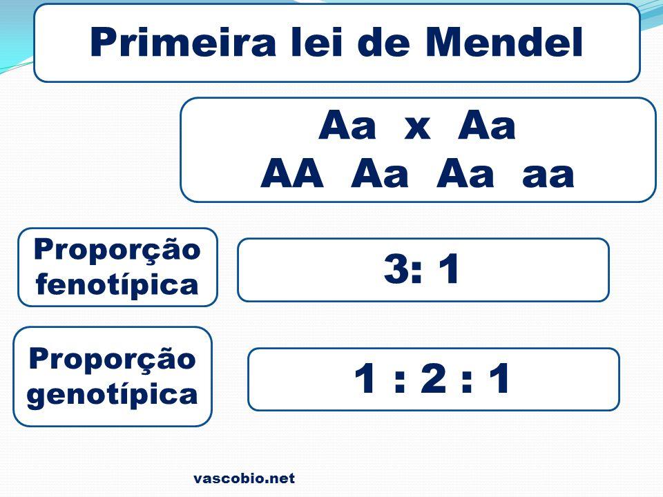 Primeira lei de Mendel Aa x Aa AA Aa Aa aa 3: 1 1 : 2 : 1