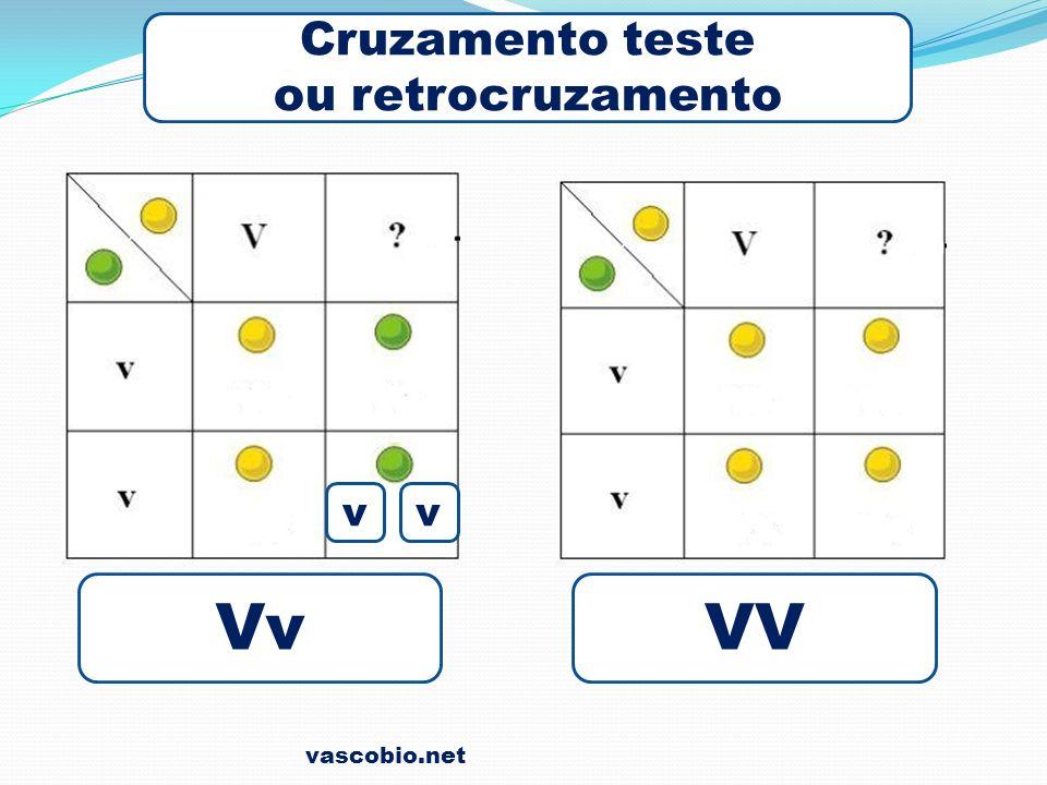 Cruzamento teste ou retrocruzamento v v Vv VV vascobio.net