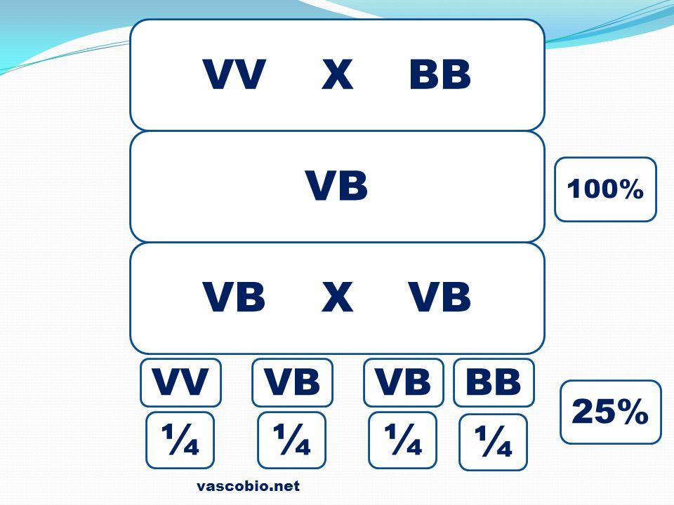 VV X BB VB 100% VB X VB VV VB VB BB 25% ¼ ¼ ¼ ¼ vascobio.net
