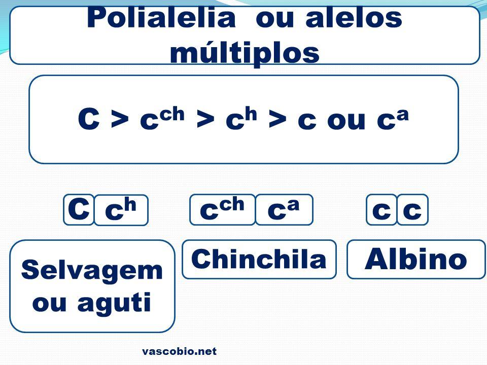 Polialelia ou alelos múltiplos