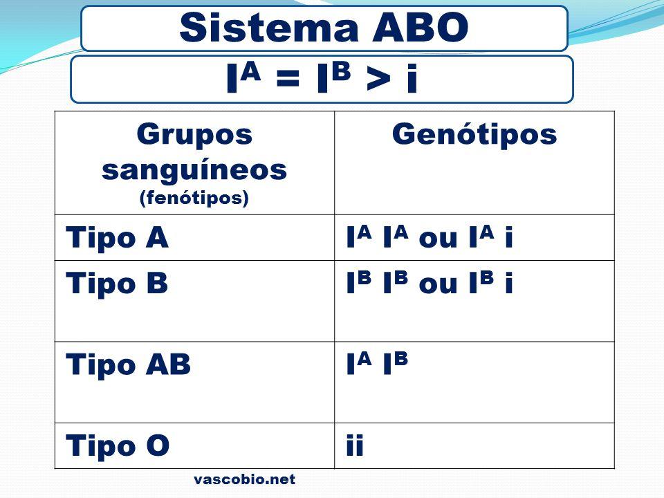 Sistema ABO IA = IB > i Grupos sanguíneos Genótipos Tipo A