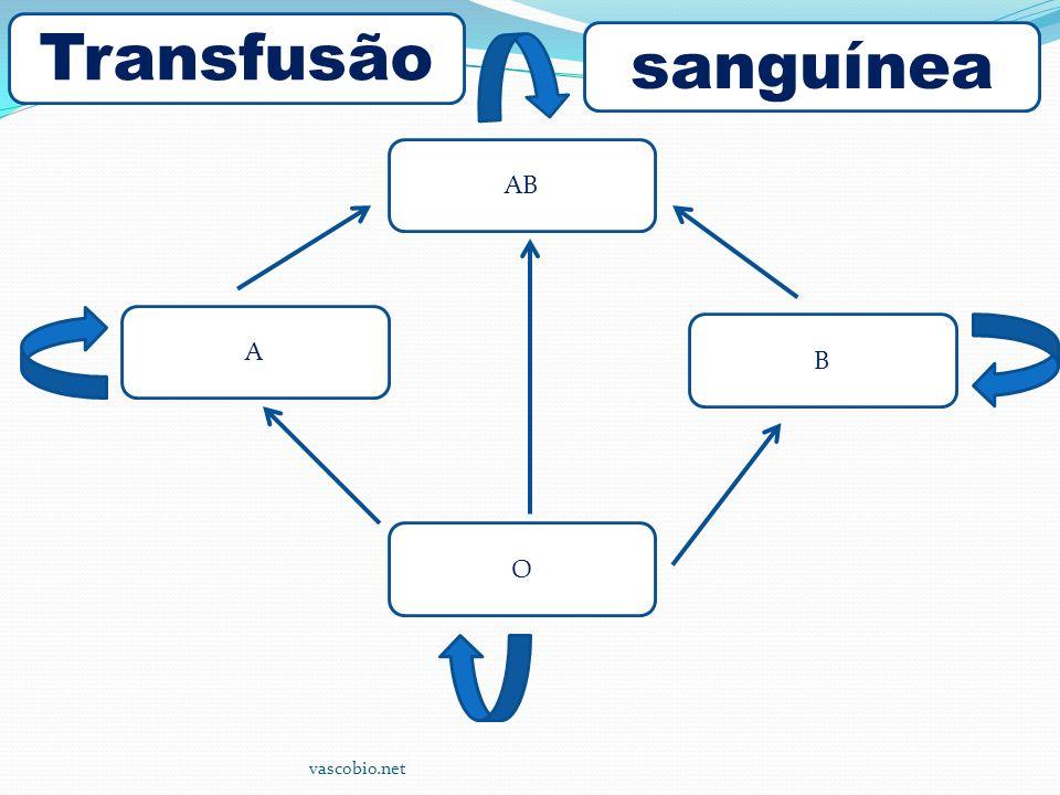 Transfusão sanguínea AB A B O vascobio.net