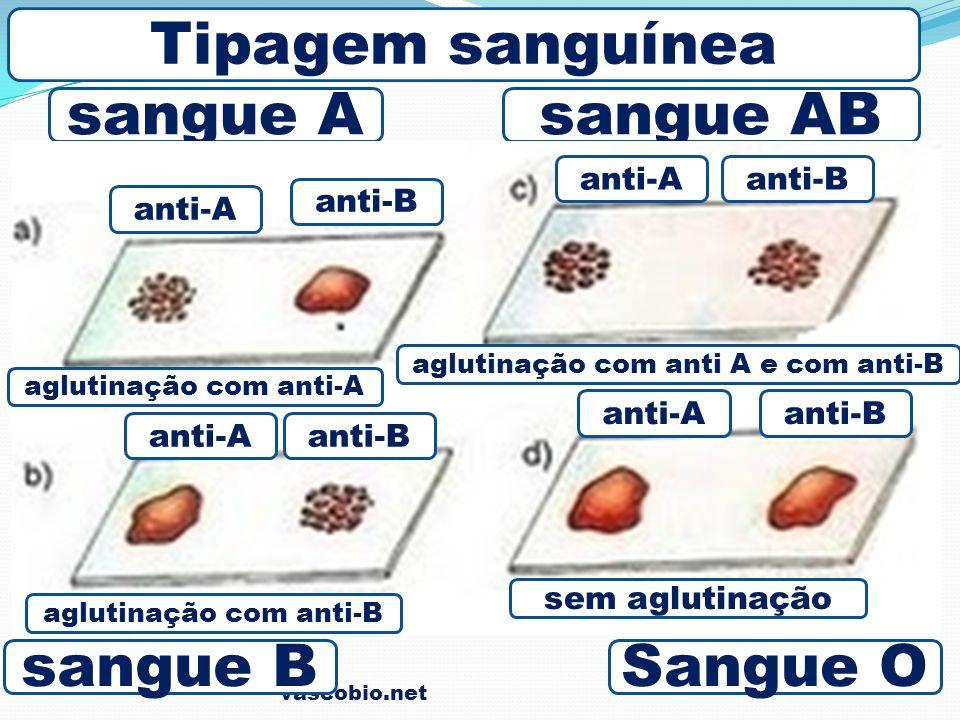 Tipagem sanguínea sangue A sangue AB sangue B Sangue O anti-A anti-B