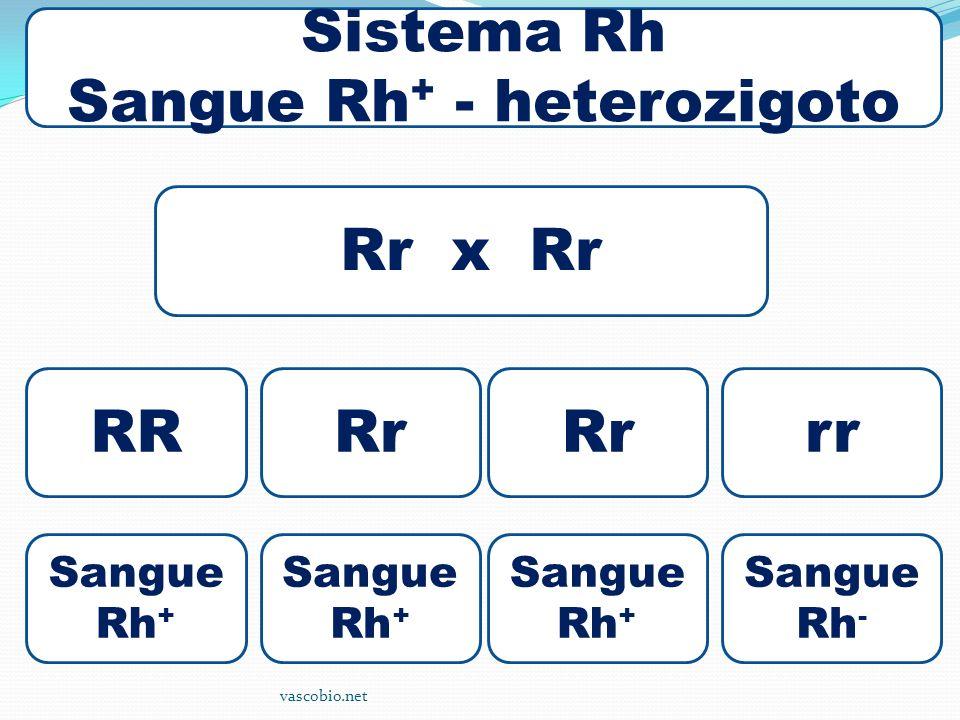 Sangue Rh+ - heterozigoto
