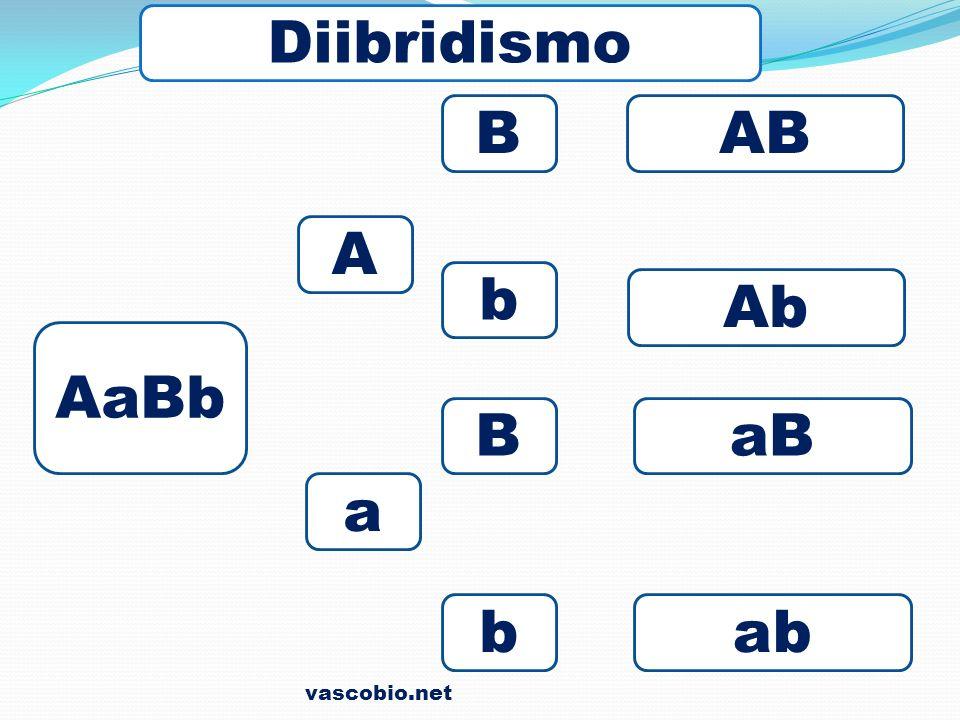 Diibridismo B AB A b Ab AaBb B aB a b ab vascobio.net