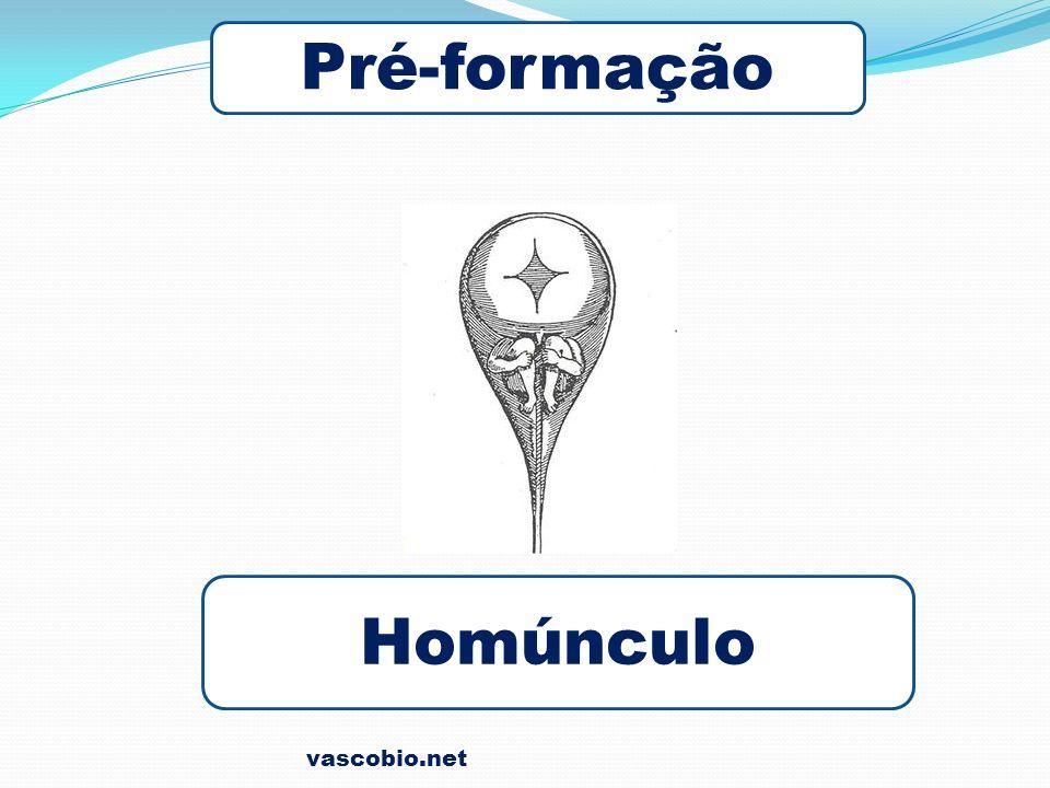 Pré-formação Homúnculo vascobio.net