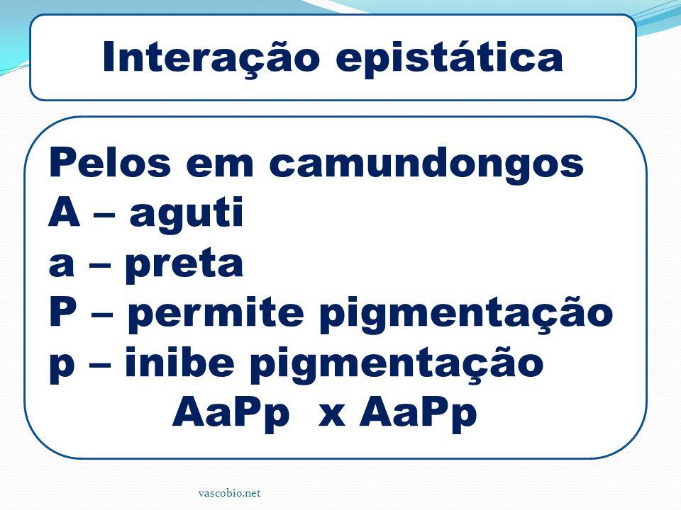 P – permite pigmentação p – inibe pigmentação AaPp x AaPp