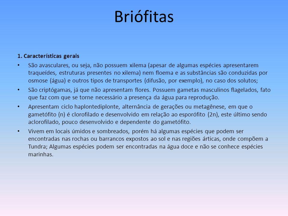 Briófitas 1. Características gerais