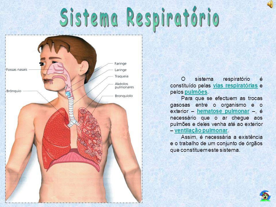 Sistema Respiratório O sistema respiratório é constituído pelas vias respiratórias e pelos pulmões.