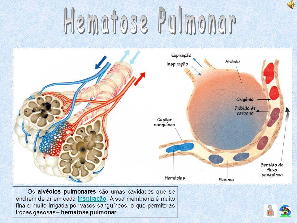 Hematose Pulmonar