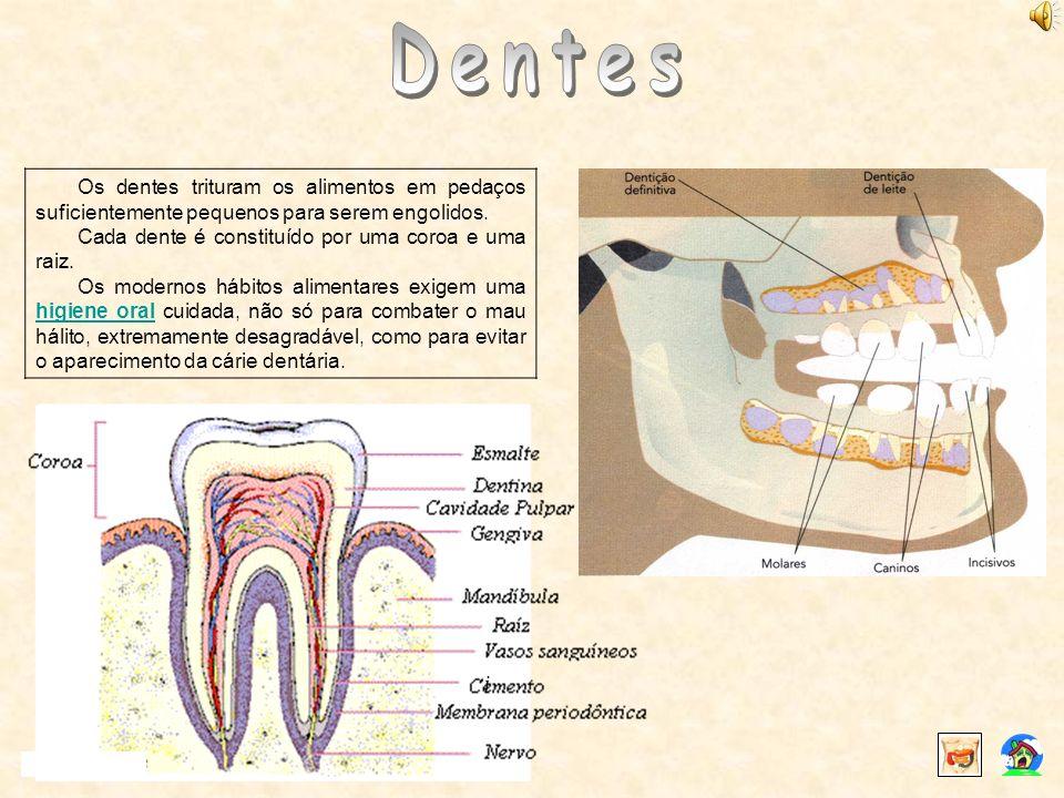 Dentes Os dentes trituram os alimentos em pedaços suficientemente pequenos para serem engolidos. Cada dente é constituído por uma coroa e uma raiz.