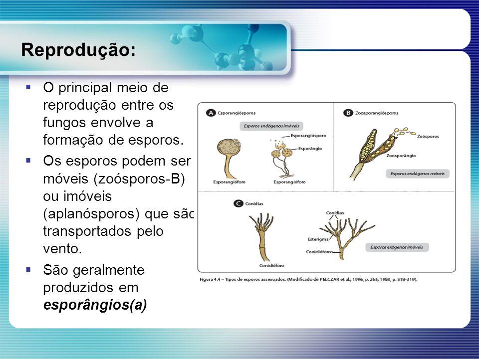 Reprodução:O principal meio de reprodução entre os fungos envolve a formação de esporos.