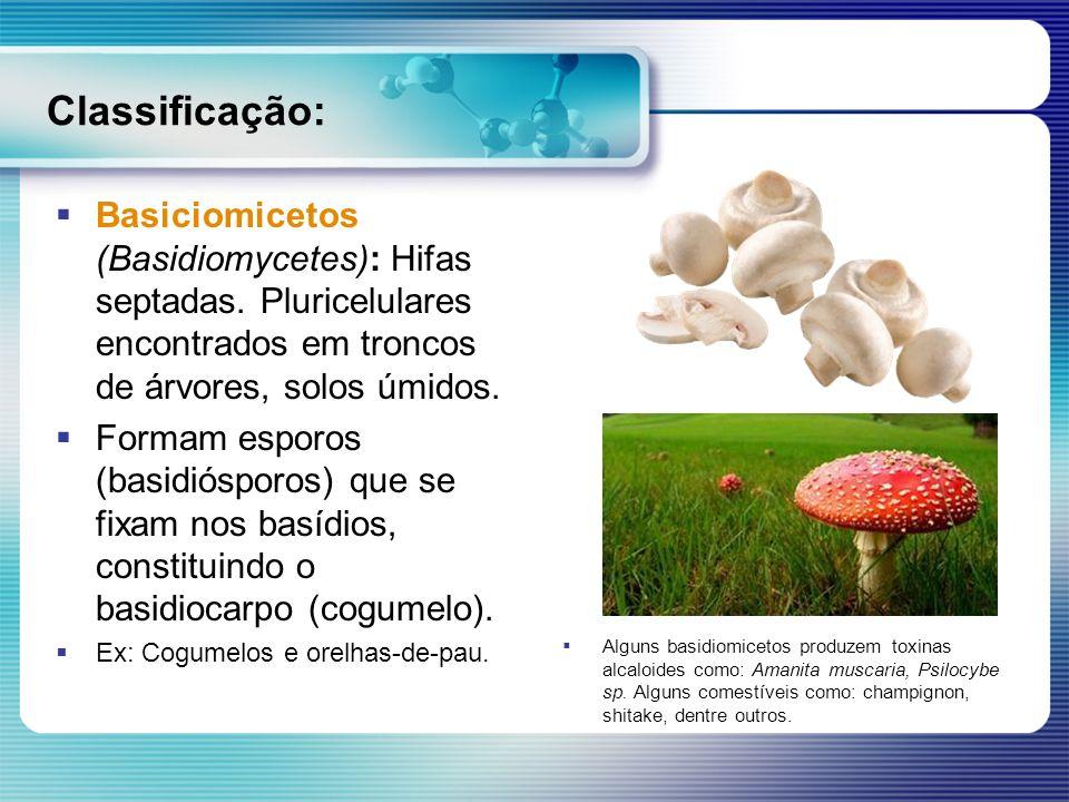 Classificação: Basiciomicetos (Basidiomycetes): Hifas septadas. Pluricelulares encontrados em troncos de árvores, solos úmidos.