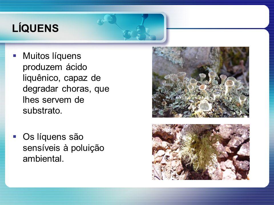 LÍQUENS Muitos líquens produzem ácido liquênico, capaz de degradar choras, que lhes servem de substrato.
