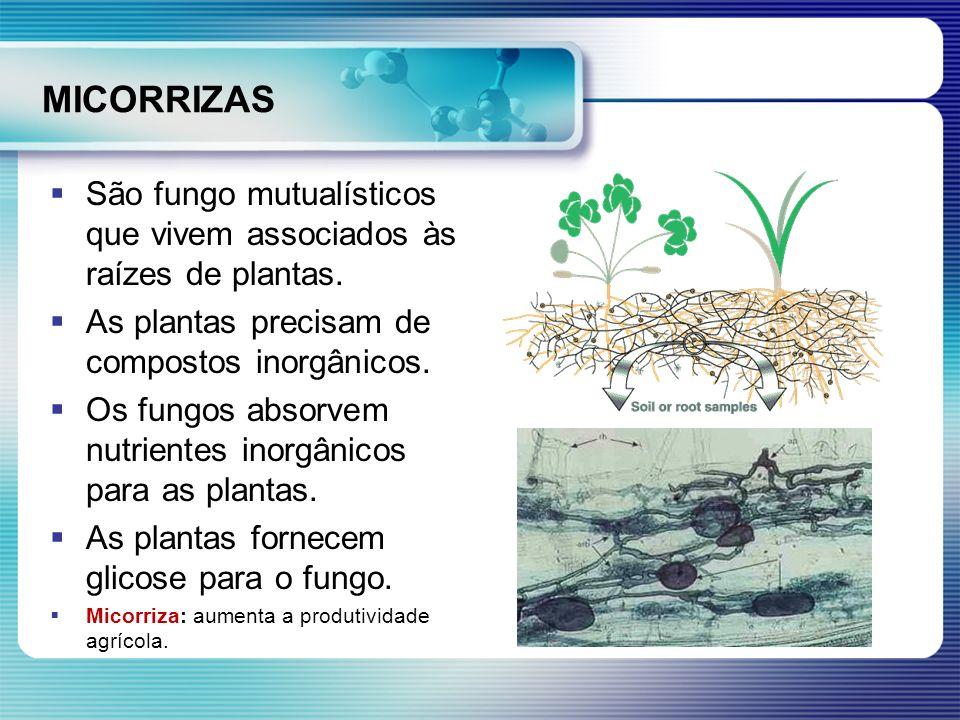 MICORRIZASSão fungo mutualísticos que vivem associados às raízes de plantas. As plantas precisam de compostos inorgânicos.