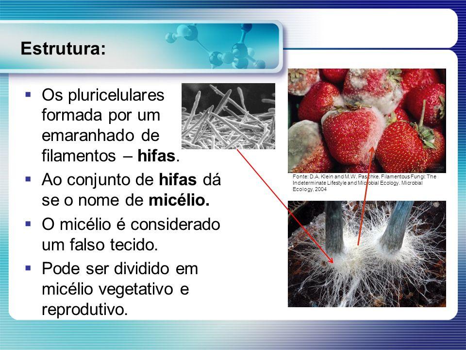Estrutura:Os pluricelulares formada por um emaranhado de filamentos – hifas. Ao conjunto de hifas dá se o nome de micélio.