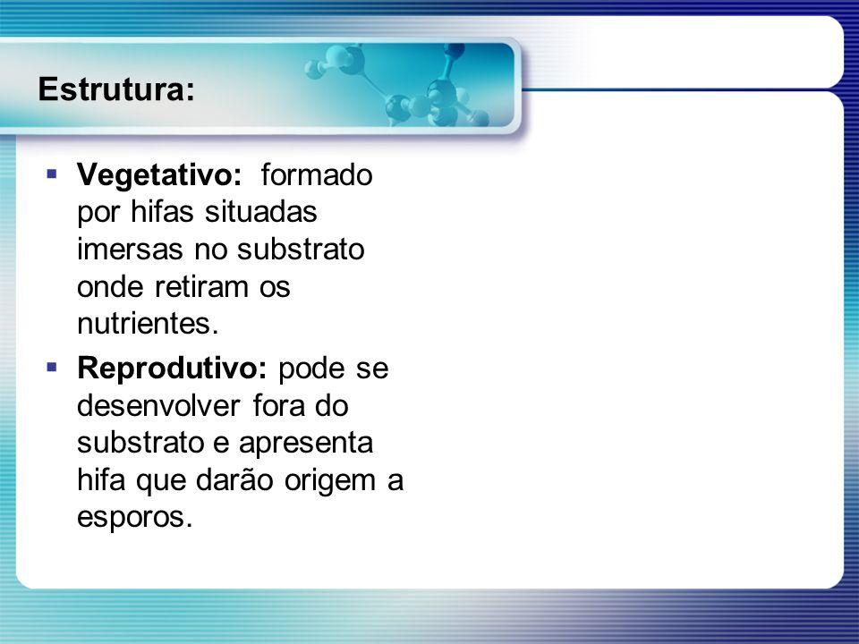 Estrutura: Vegetativo: formado por hifas situadas imersas no substrato onde retiram os nutrientes.
