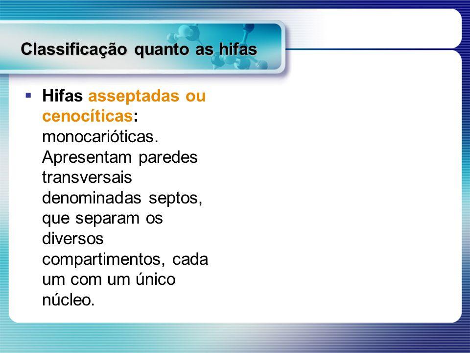 Classificação quanto as hifas