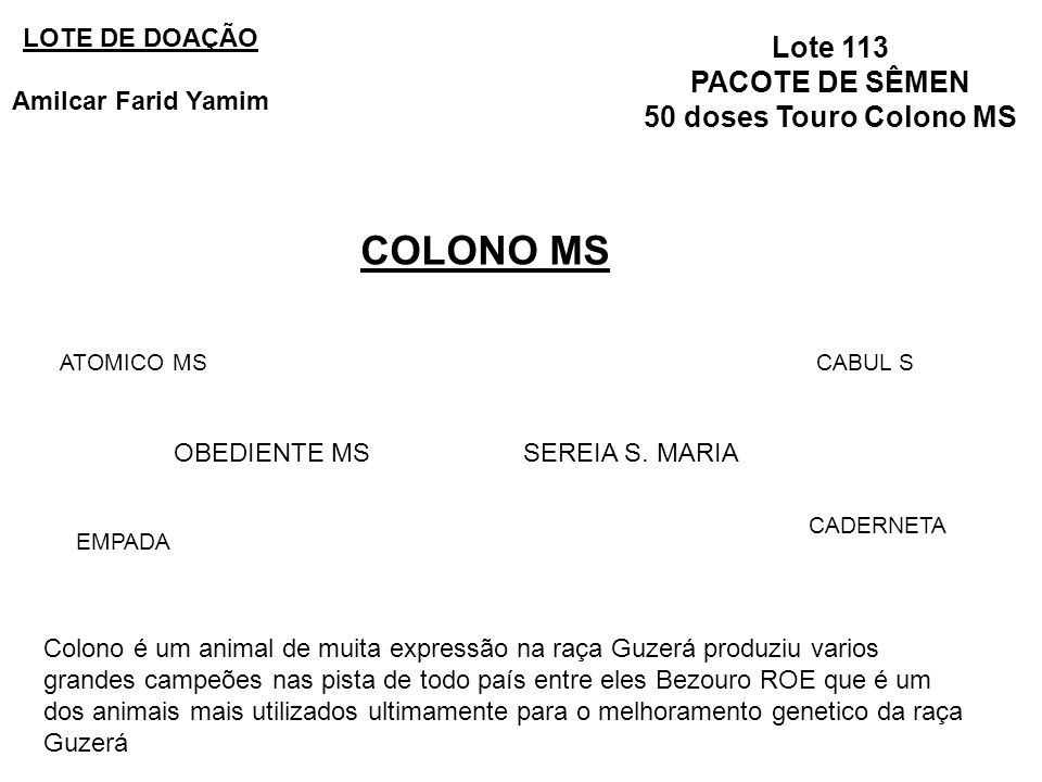 COLONO MS Lote 113 PACOTE DE SÊMEN 50 doses Touro Colono MS