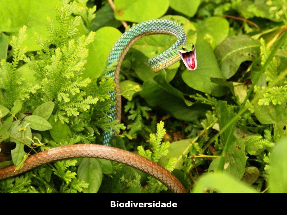 Biodiversidade Bico de Papagaio – Riozinho do Anfrísio