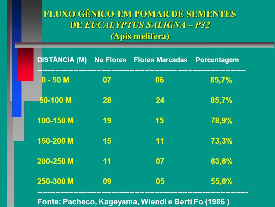 FLUXO GÊNICO EM POMAR DE SEMENTES DE EUCALYPTUS SALIGNA – P32 (Apis melifera)
