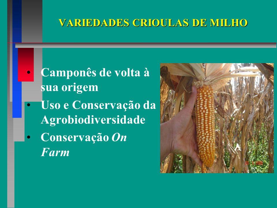 VARIEDADES CRIOULAS DE MILHO