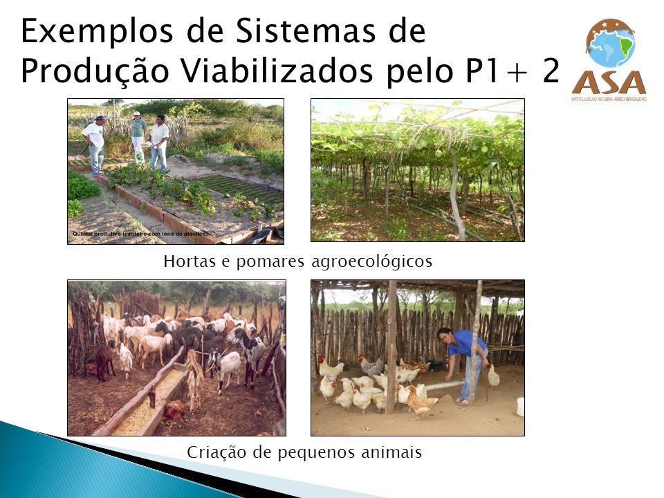 Exemplos de Sistemas de Produção Viabilizados pelo P1+ 2