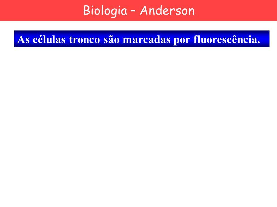 Biologia – Anderson As células tronco são marcadas por fluorescência.