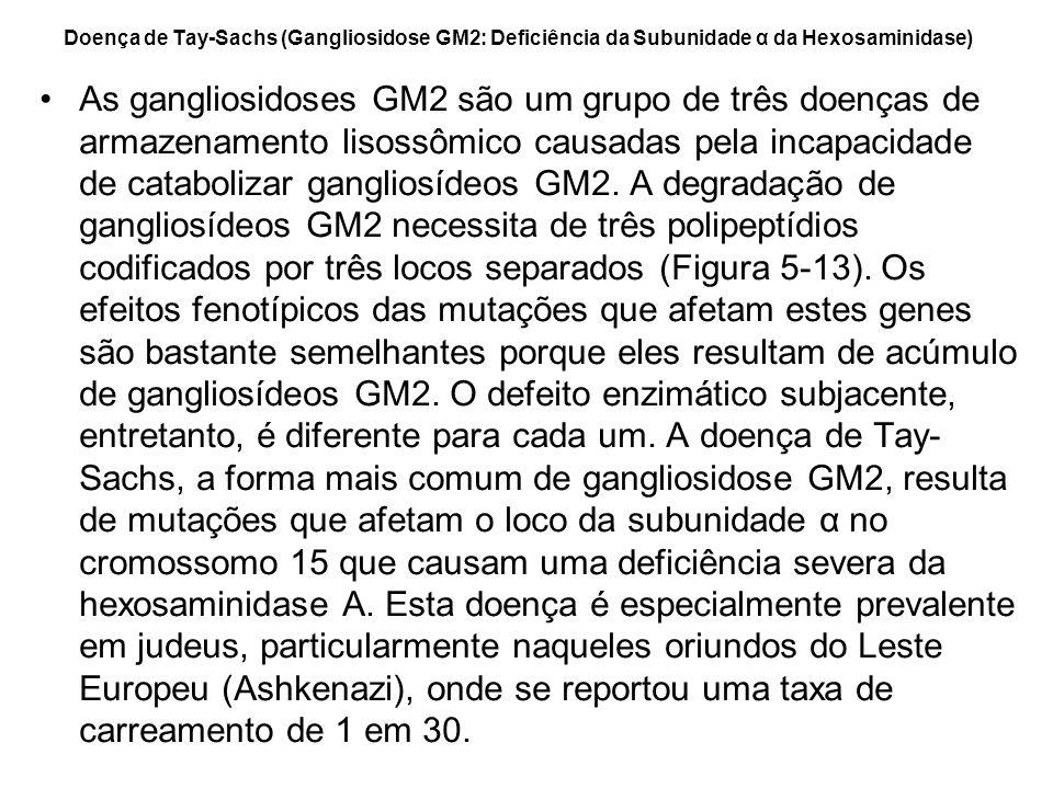 Doença de Tay-Sachs (Gangliosidose GM2: Deficiência da Subunidade α da Hexosaminidase)