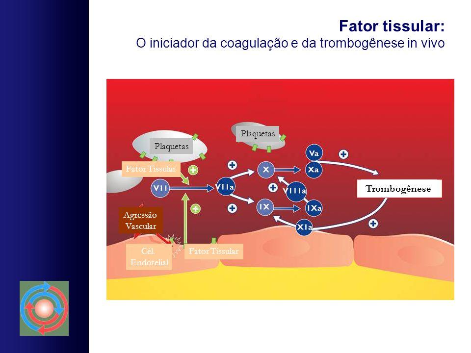 Fator tissular: O iniciador da coagulação e da trombogênese in vivo
