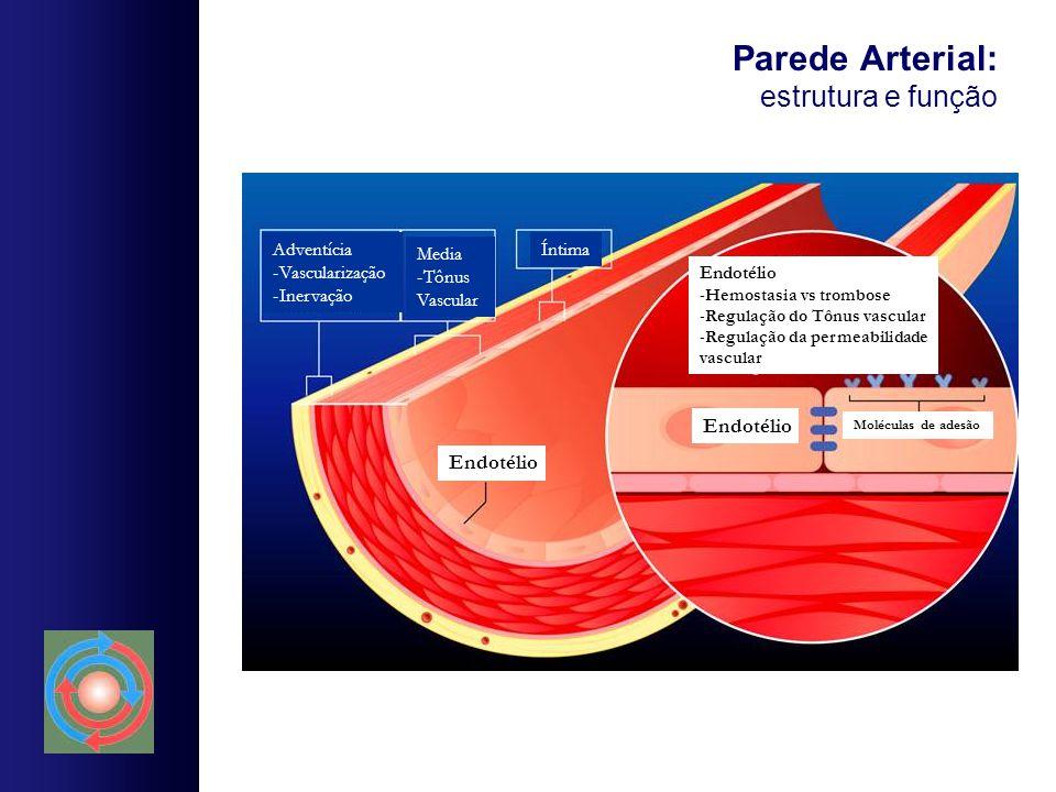 Parede Arterial: estrutura e função