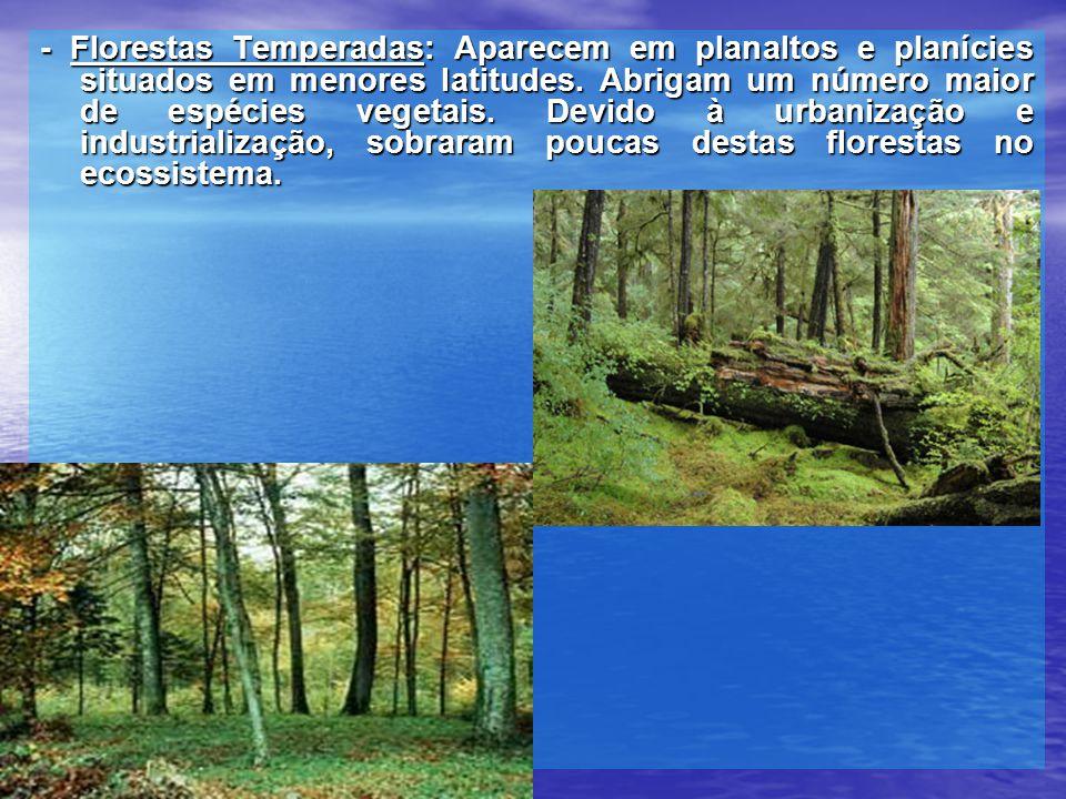 - Florestas Temperadas: Aparecem em planaltos e planícies situados em menores latitudes.