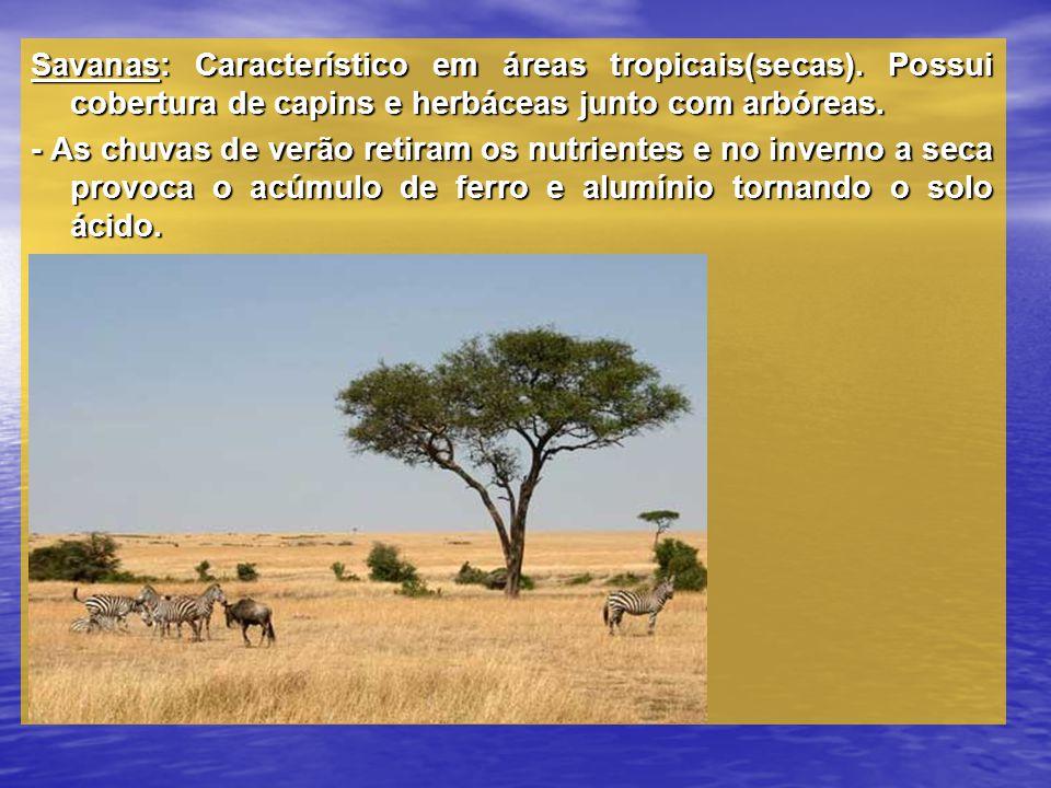 Savanas: Característico em áreas tropicais(secas)