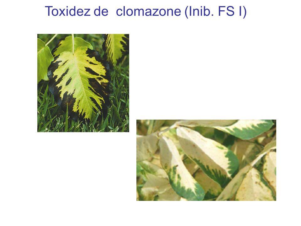 Toxidez de clomazone (Inib. FS I)