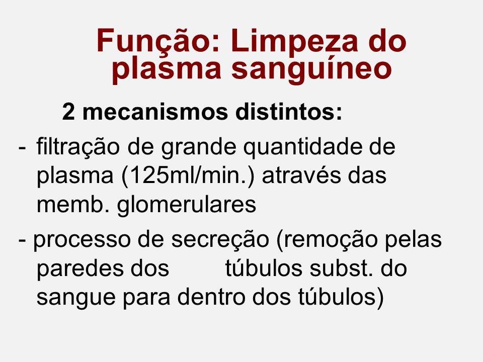 Função: Limpeza do plasma sanguíneo