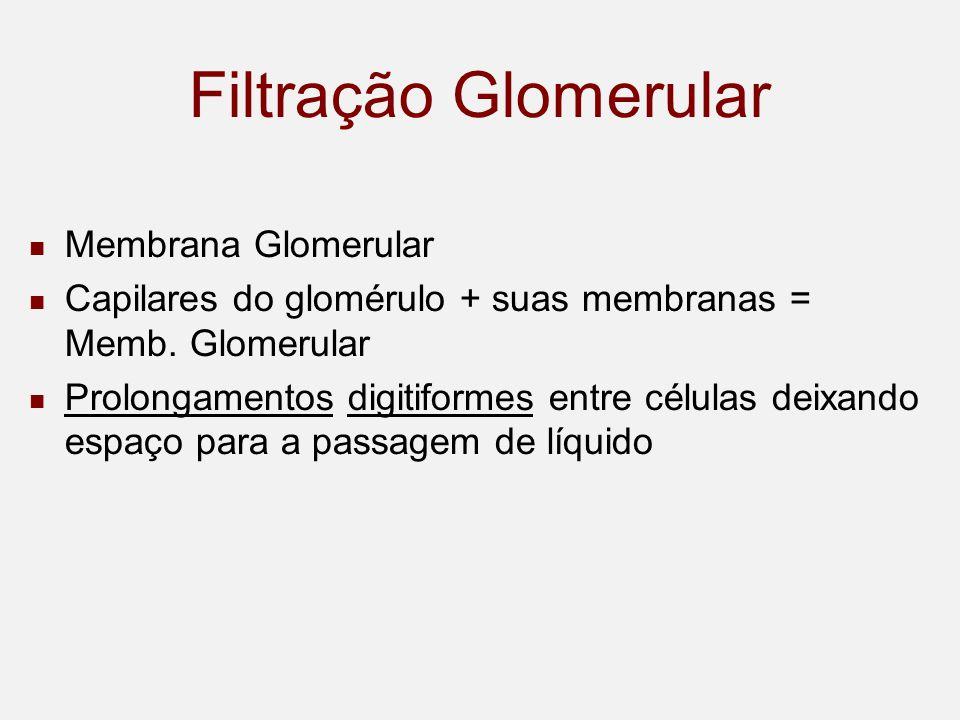 Filtração Glomerular Membrana Glomerular