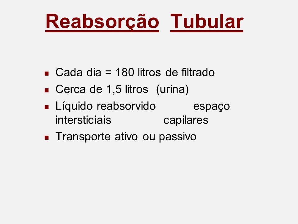 Reabsorção Tubular Cada dia = 180 litros de filtrado