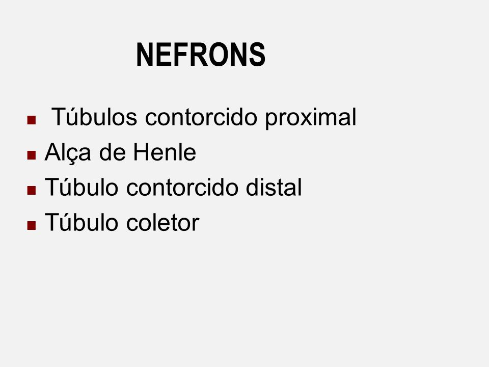 NEFRONS Túbulos contorcido proximal Alça de Henle
