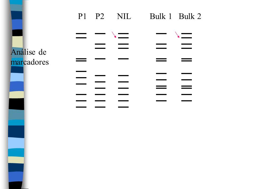 P1 P2 NIL Bulk 1 Bulk 2 Análise de marcadores