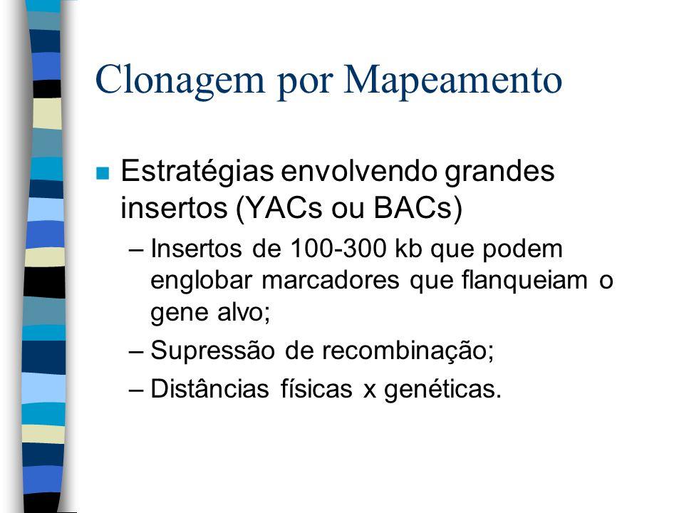 Clonagem por Mapeamento