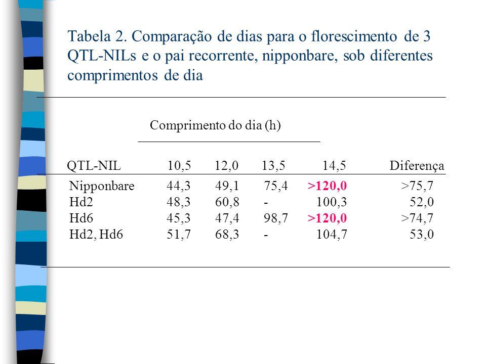 Tabela 2. Comparação de dias para o florescimento de 3 QTL-NILs e o pai recorrente, nipponbare, sob diferentes comprimentos de dia