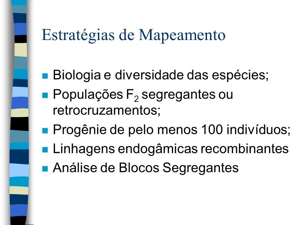 Estratégias de Mapeamento